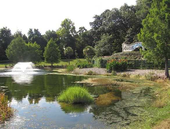 Small pond with fountain